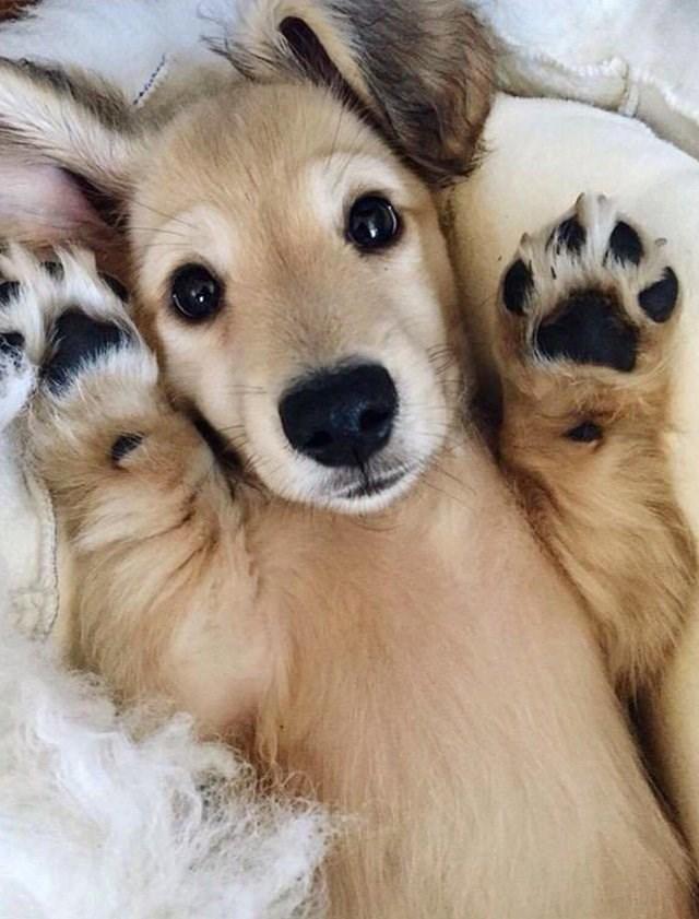 cute animals - Vertebrate