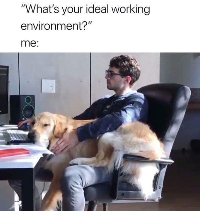 monday meme about holding a dog while you work