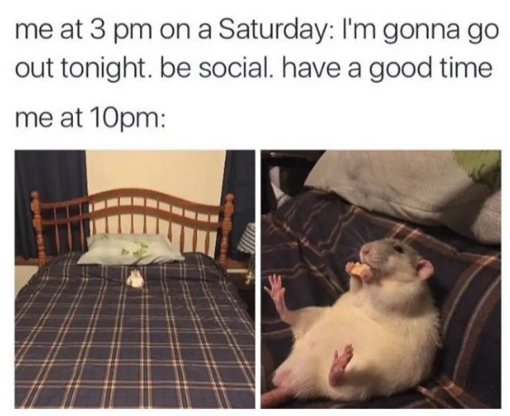 adulting meme about spending the weekend at home