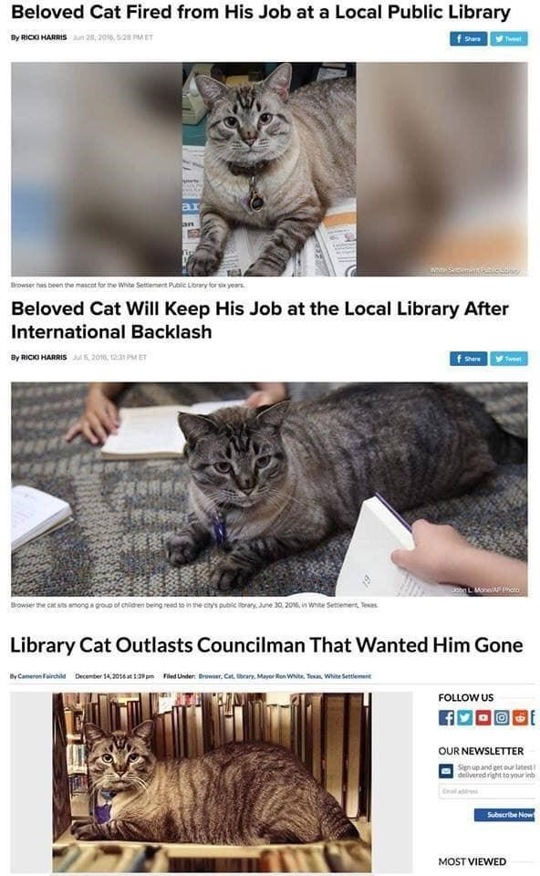 Cat - Beloved Cat Fired from His Job at a Local Public Library By RICKI HARRIS 28, 2016, 528 PM ET Tweet orts ar an Browser has been the mascot for the White Seitiement Pubic Library lor six years Beloved Cat Will Keep His Job at the Local Library After International Backlash By RICKI HARRIS5, 2016, 12:31 PM ET Tweet Shere ohnL Mone AP p Browser the cat sts among a grouo of children being resd to in the city's public ibrary June 30 2016, in Whibe Setement Tesas Library Cat Outlasts Councilman Th