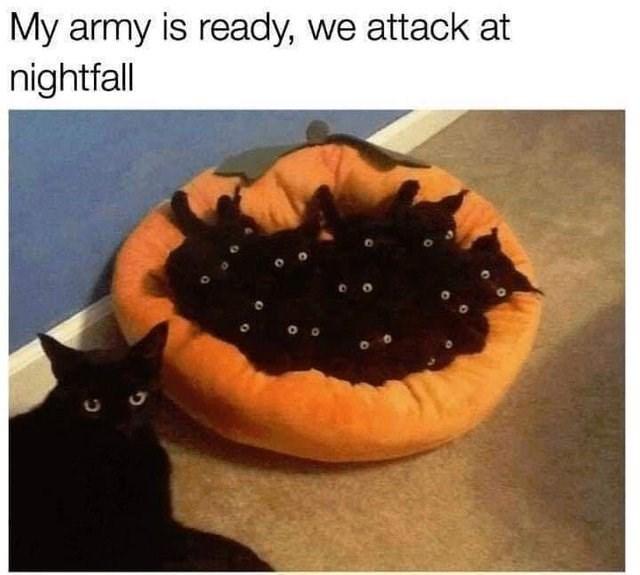 monday memes - monday meme of a scary looking kitten litter
