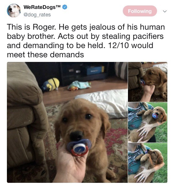 bored af meme about a dog with a pacifier