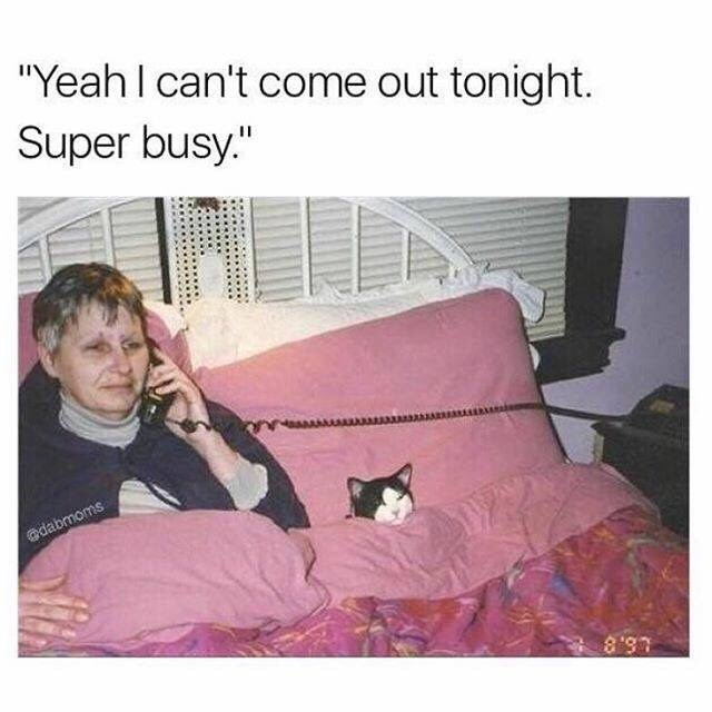 """dumb memes - dumb meme with caption that reads, """"Yeah I can't come out tonight. Super busy"""" above a pic of a woman sitting in bed talking on the phone next to her cat"""