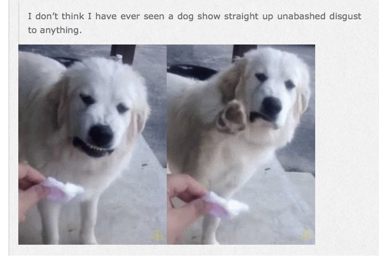 dumb meme with a dog looking disgusted