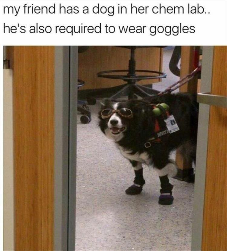 dumb meme about a dog wearing safety equipment