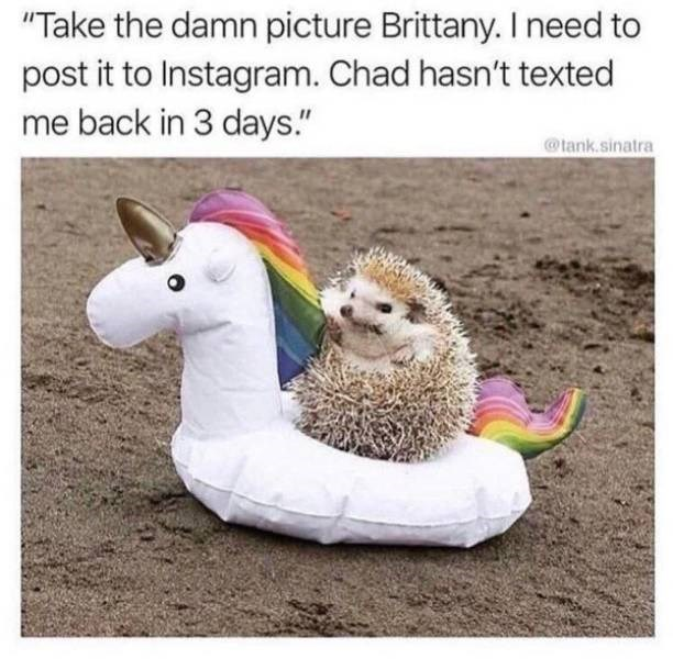 "Caption that reads, ""Take the damn picture Brittany. I need to post it to Instagram. Chad hasn't texted me back in three days"" above a pic of a hedgehog in a little unicorn pool floaty on the beach"