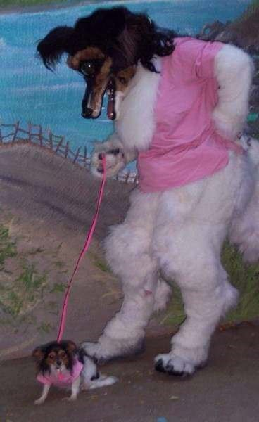 cringey meme of person in fursuit walking a dog in a matching vest