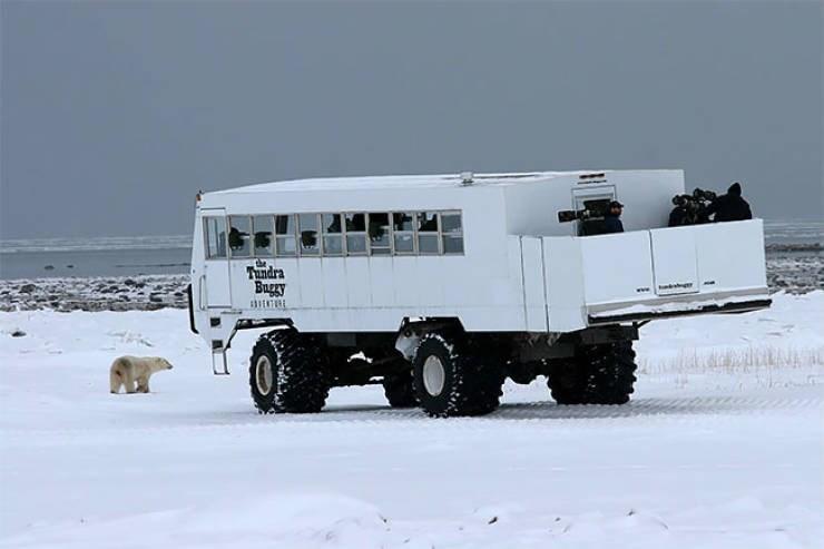 Vehicle - Tundra Buggy