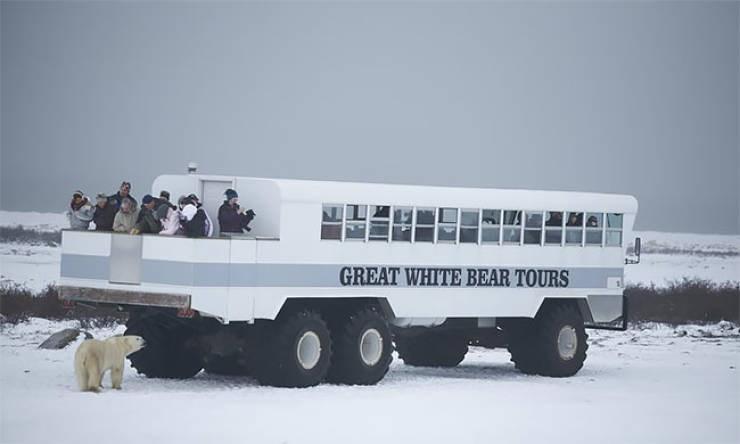 Transport - GREAT WHITE BEAR TOURS