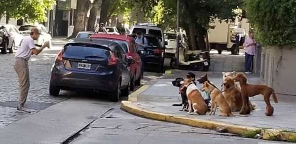 dog meme of a bunch of dogs looking at one man on a street corner