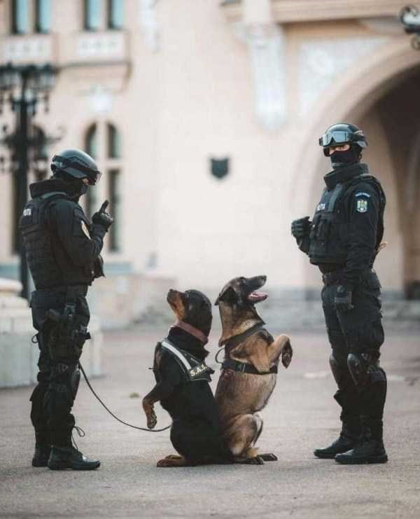 dog meme of police dogs staring at their owners