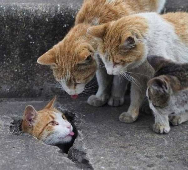 cat meme of a few cats looking over at another cat that is sitting in a crack of the pavement