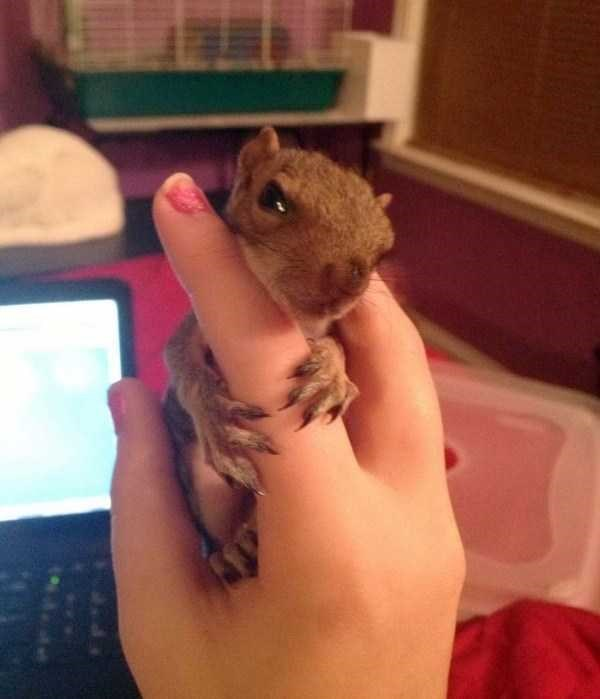 baby squirrel hugging a persons finger