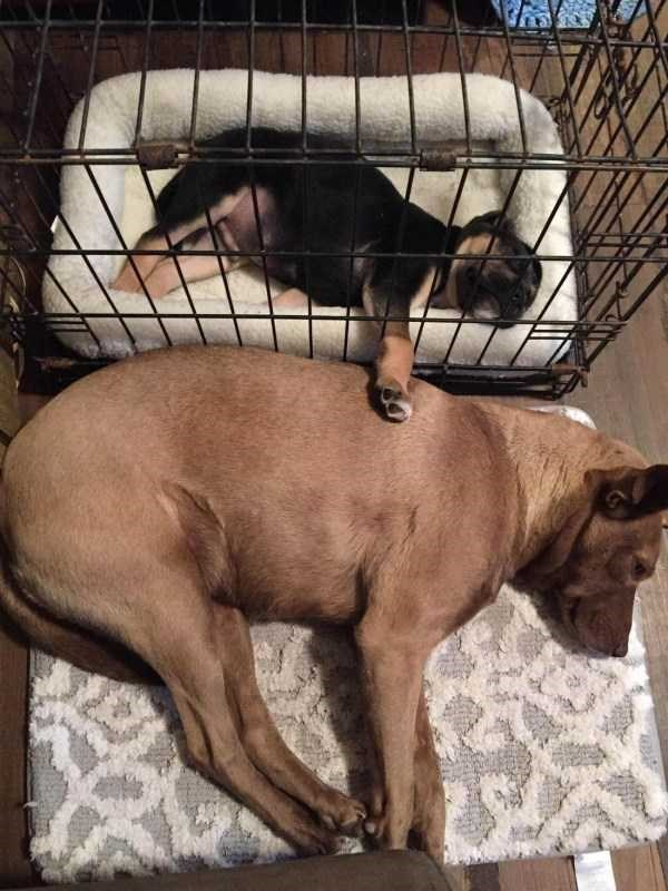 dog meme of a puppy in a cage putting out its paw to touch a dog