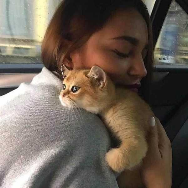 kitten meme resting on its owners shoulders
