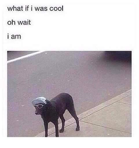 dog meme of a dog wearing sunglasses and a hat