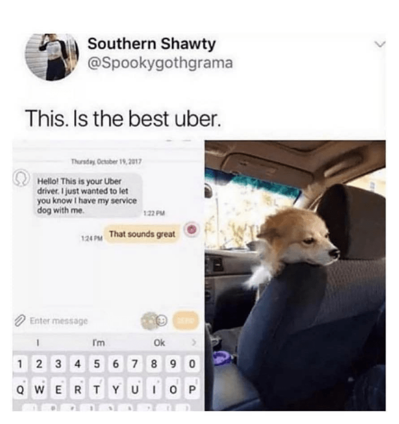 dog meme about a uber driver that has a service dog in the car