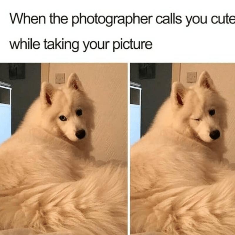 dog meme of a fluffy dog winking at the camera