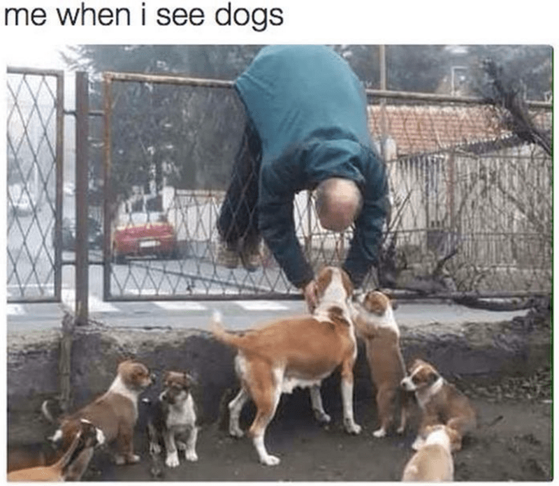 dog meme of a man leaning over a fence to pet puppies