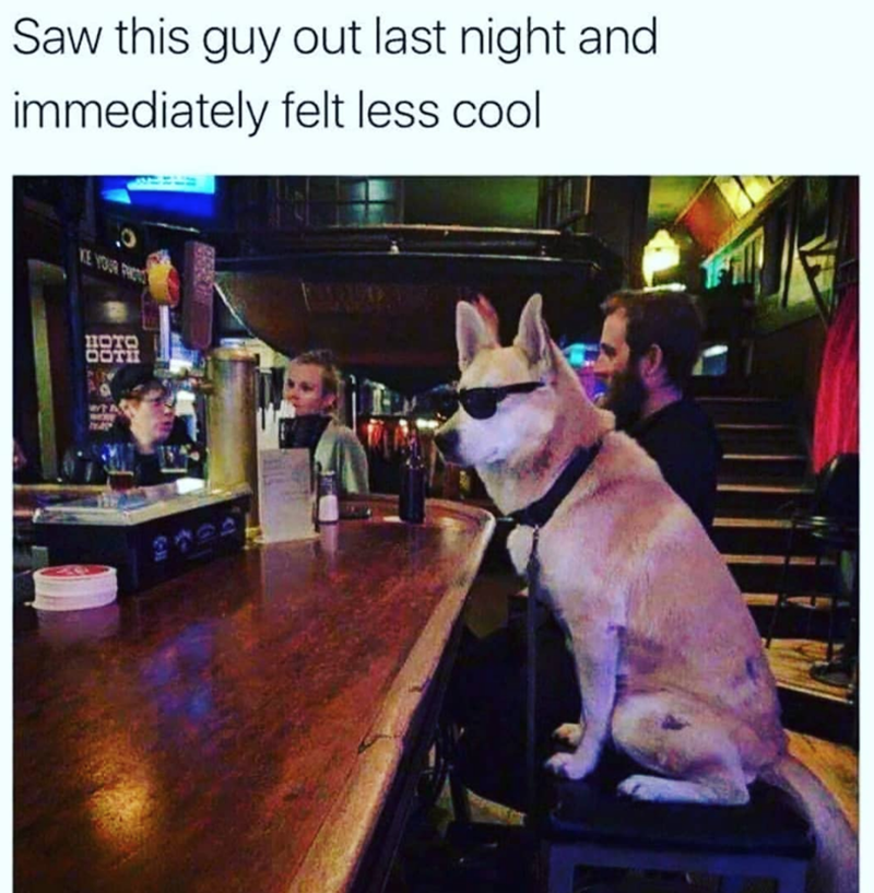 dog meme of a dog sitting at a bar and wearing sunglasses