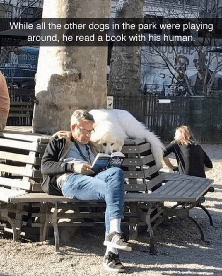 dog meme of person reading a book next to his dog at a park