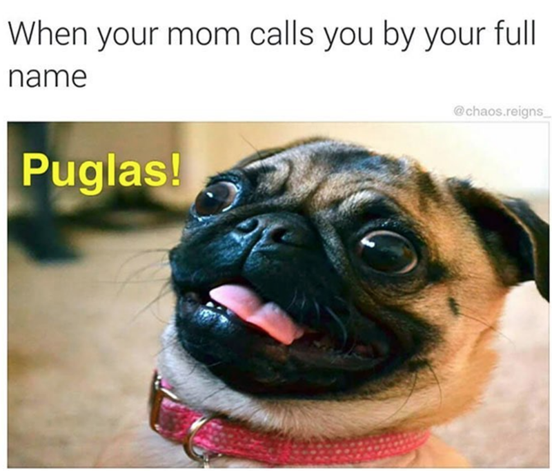 dog meme of a pug with a surprised expression
