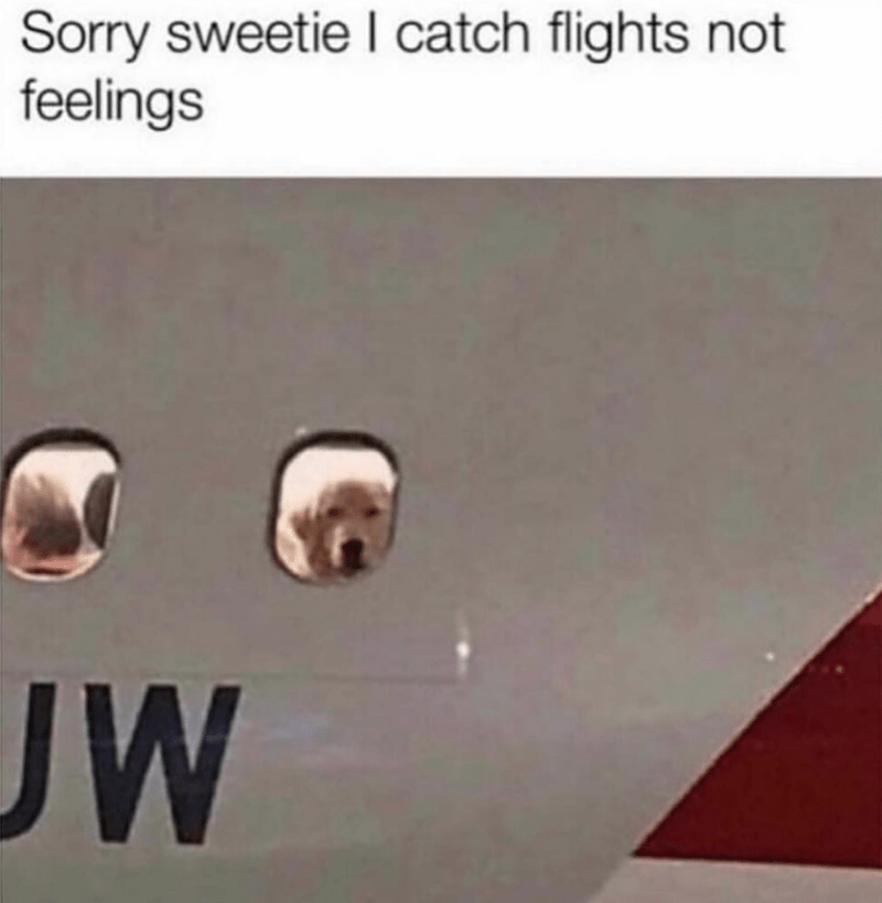 dog meme of a golden looking out a plane window