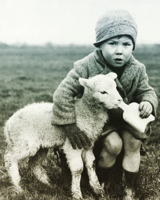 vintage kids and pets - Sheep