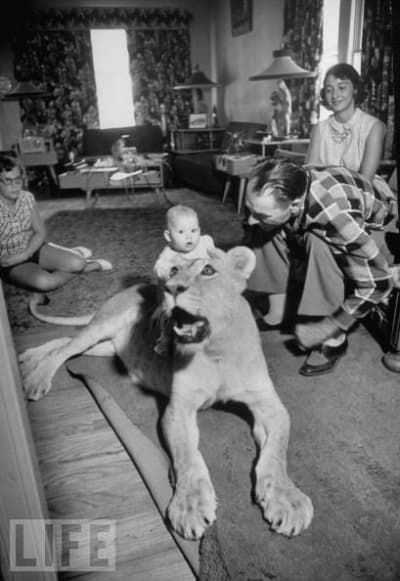 vintage kids and pets - Dog - LIFE