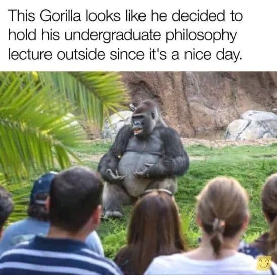 """Caption that reads, """"This gorilla looks like he decided to hold his undergraduate philosophy lecture outside since it's a nice day"""" above a pic of people looking at a gorilla who looks like he's about to give a lecture"""