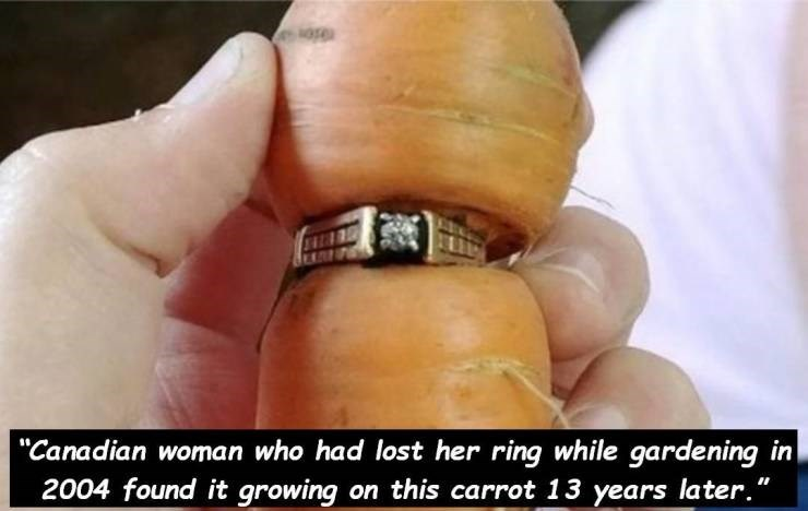 """Ring - ose oтa """"Canadian woman who had lost her ring while gardening in 2004 found it growing on this carrot 13 years later."""""""