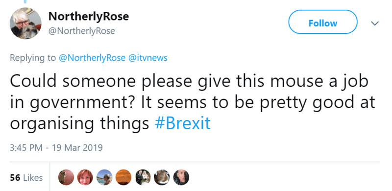 mouse meme cleaning a shed and comparing it to brexit