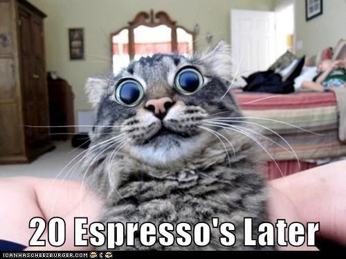 Cat - 20 Espresso's Later ICANHASCHEEZEURGER0OM