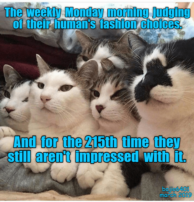 Cat - The weekly Monday morning judging Of their human's fashion choices And for the 215th time they still arent impressed with it. bajio6401 march 2019