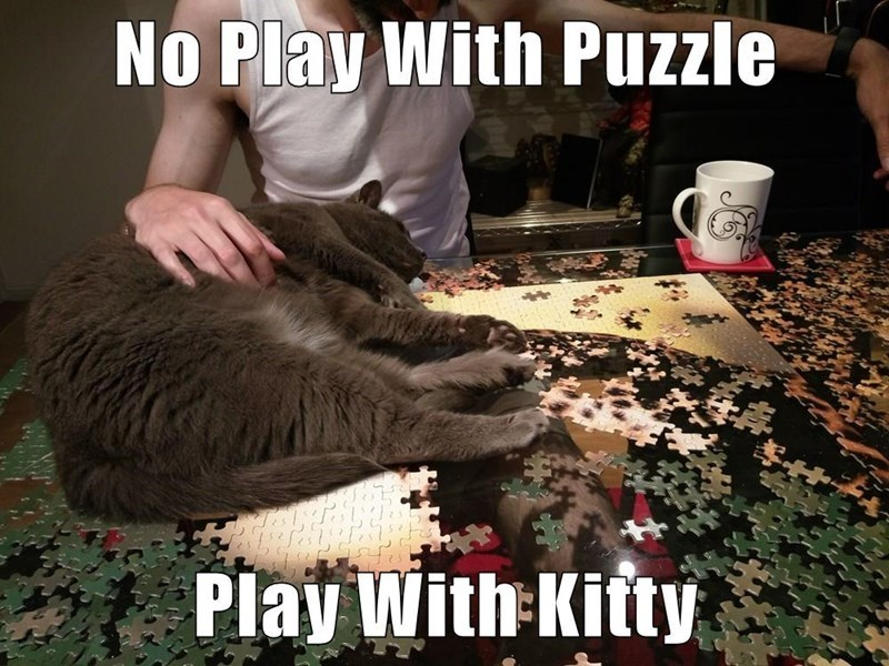 Photo caption - No Play With Puzzle Play With Kitty