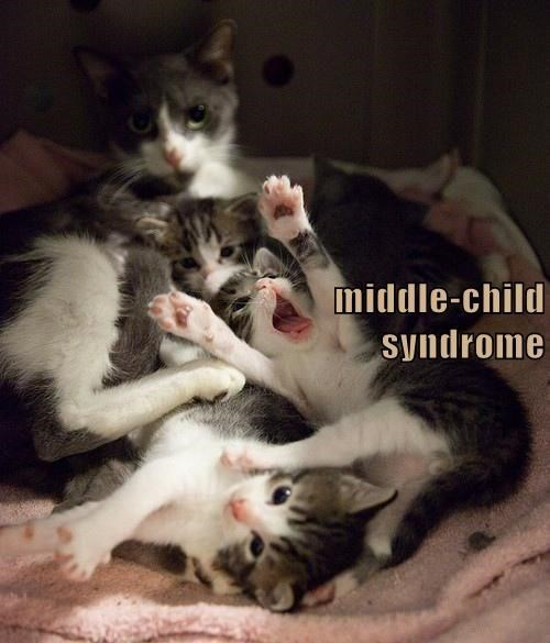 Cat - middle-child Syndrome