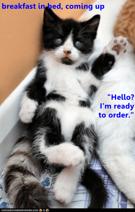 """Cat - breakfast in bed, coming up """"Hello? I'm ready to order. ICANHASCHEEZIURGER,COM"""