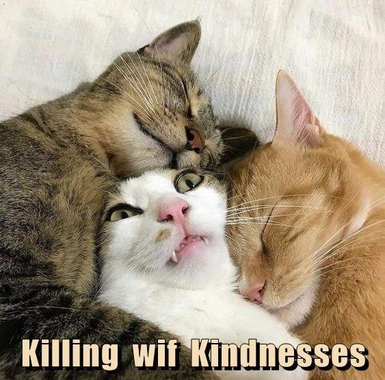 Cat - Killing wif Kindnesses
