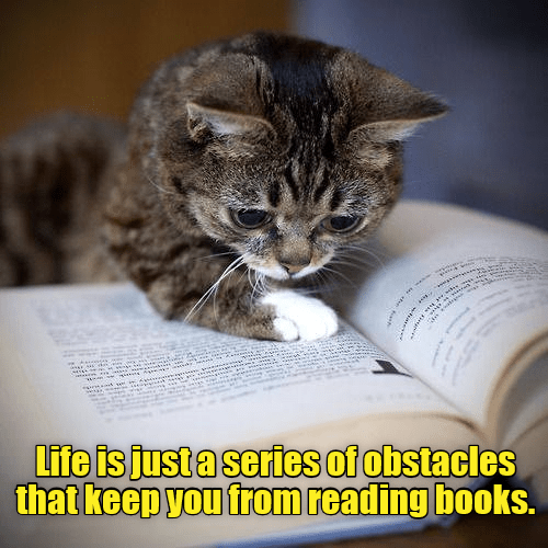 Cat - es Life is just a series of obstacles that keep you from reading books.