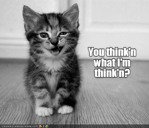 Cat - You think'n what I'm think'n? ICANHASCHEEZEURGER.COM