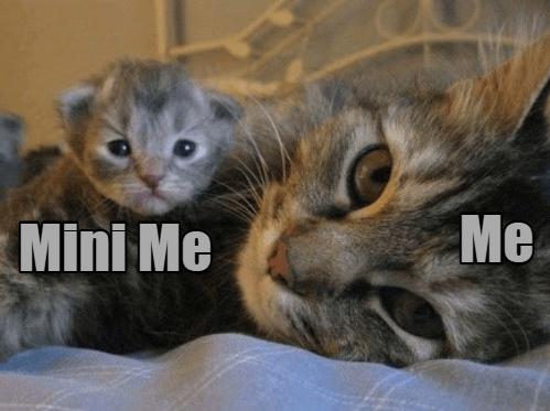 Cat - Me Mini Me