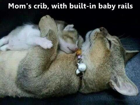 Cat - Mom's crib, with built-in baby rails