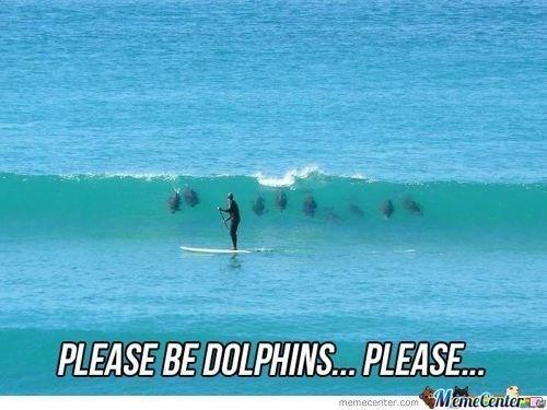 Wave - PLEASE BE DOLPHINS.. PLEASE.. MemeCenter e memecenter.com