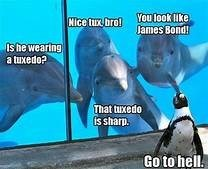 Dolphin - You look ike Mice x breJames Bond Is he wearing a tuxedo? That tuxedo is sharp. Go to hell