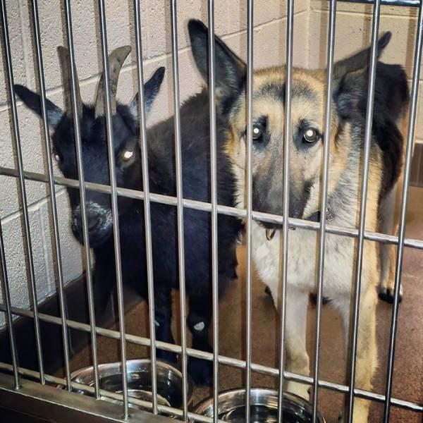 cute animals - Animal shelter