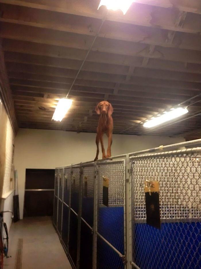 cute animals - Ceiling