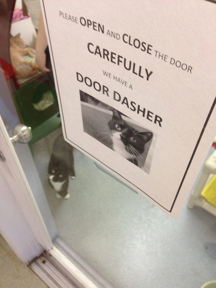 cute animals - Text - PLEASE OPEN AND CLOSE THE DOOR CAREFULLY WE HAVE A DOOR DASHER
