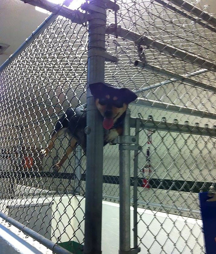 cute animals - Chain-link fencing