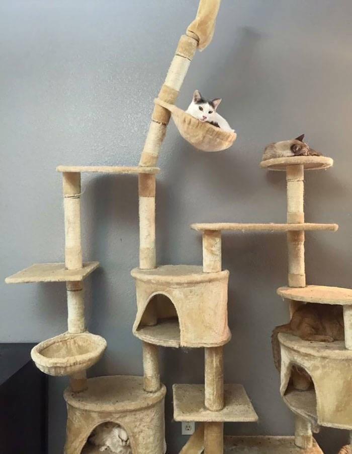 cute animals - Wood