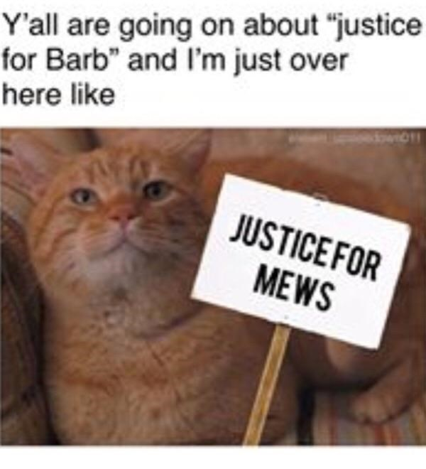 "Cat - Y'all are going on about ""justice for Barb"" and I'm just over here like owi JUSTICEFOR MEWS"